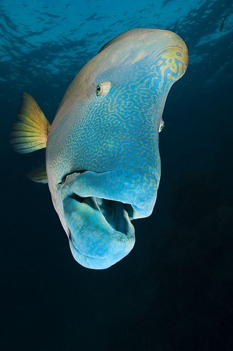 Большой барьерный риф австралия 30