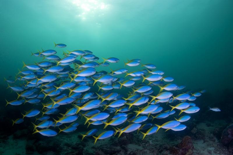 Большой Барьерный риф. Австралия. Красивые подводные фото