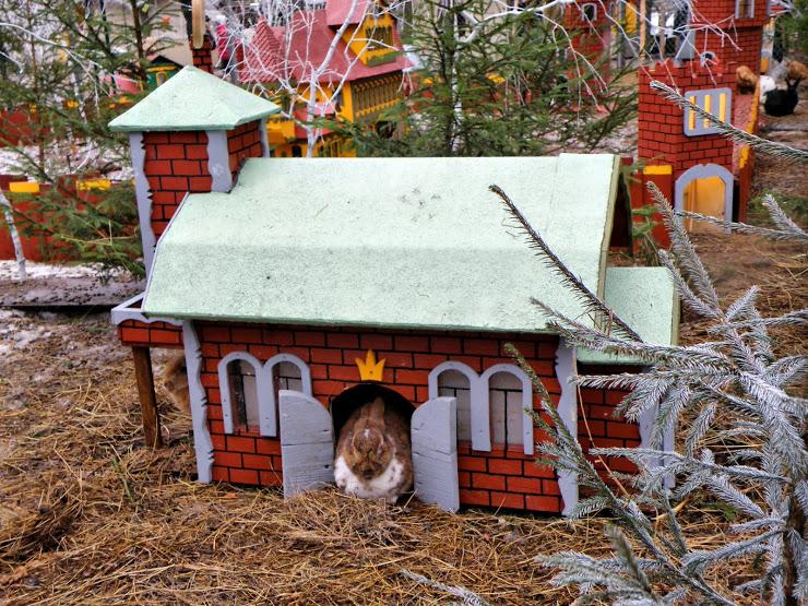 Город кроликов в Латвии. Рига. Фото