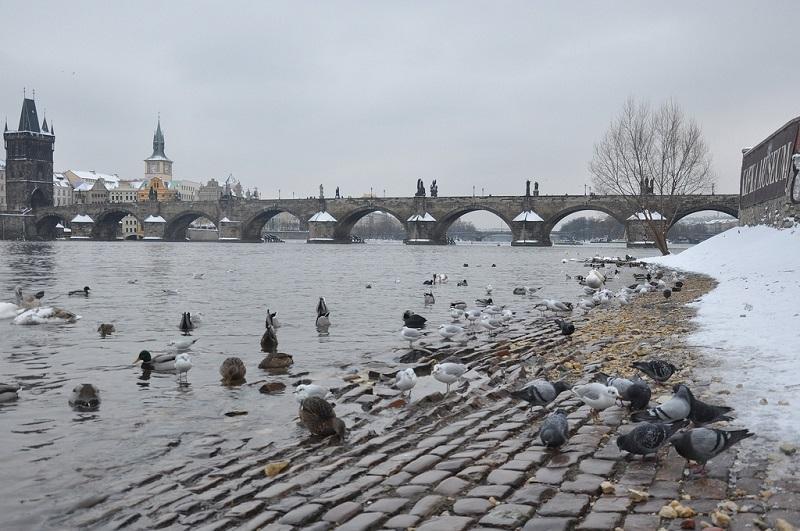 Карлов мост в праге чехия 37 фото