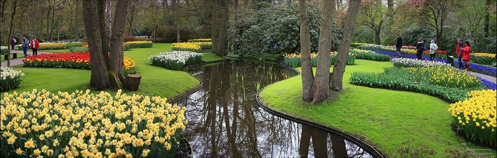 Парк цветов Кёкенкоф. Нидерланды. Фото