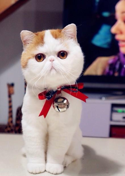 картинки кот снупи