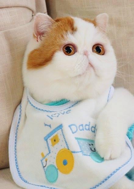 Кот Снупи - звезда интернета. Фото