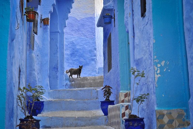 Шефшауэн – синий город в Марокко. Фото