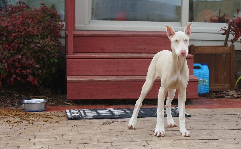 Животные-альбиносы. Фото