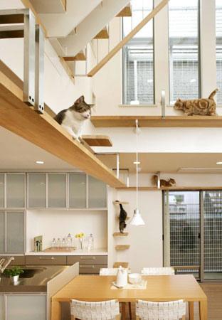 Дизайн дома для кошек от Asahi Kasei.  Фото.