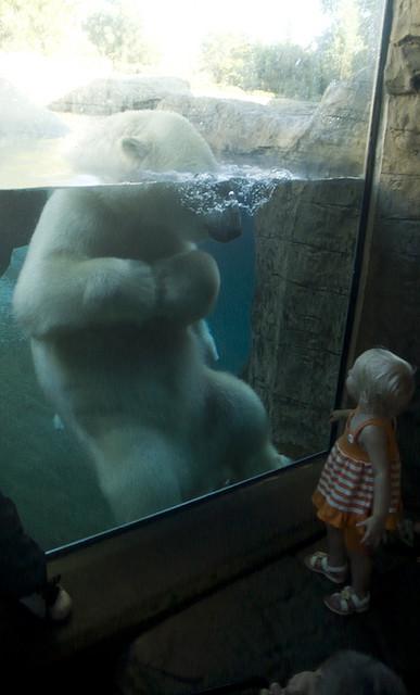 Белый медведь и девочка в зоопарке Сан-Диего. Фото