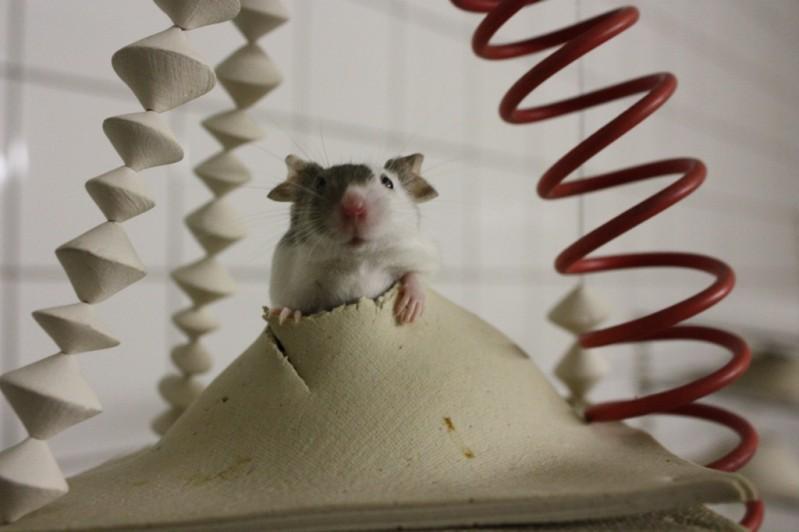 Игровая зона для мышей. Фото