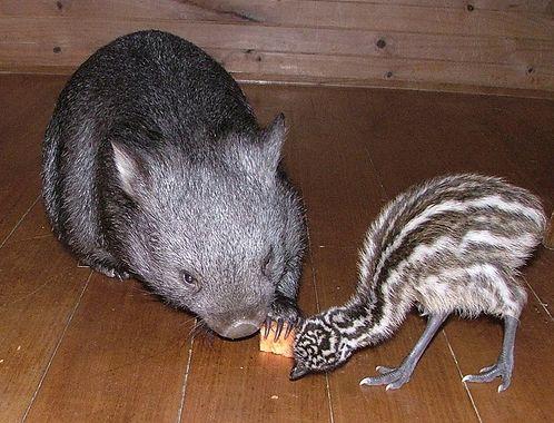 动物友谊 图片