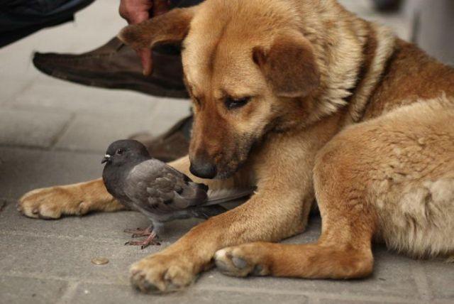 Дружба животных. Щенок и голубь