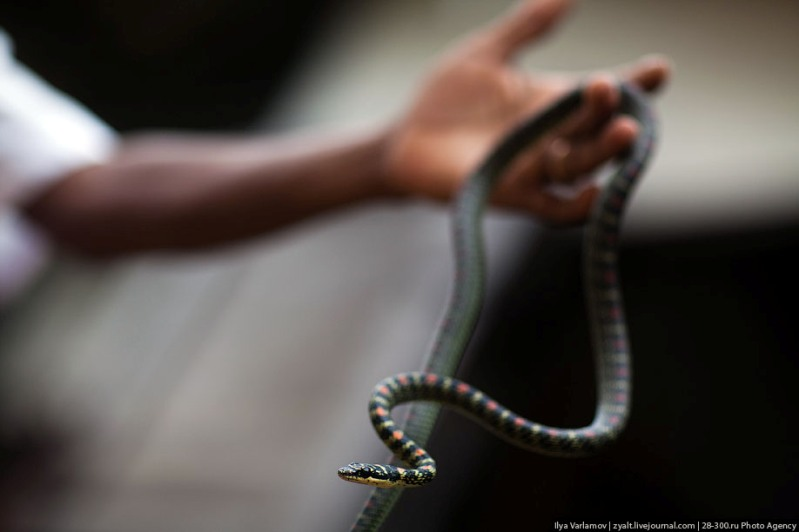 Укротитель и змея. Фото