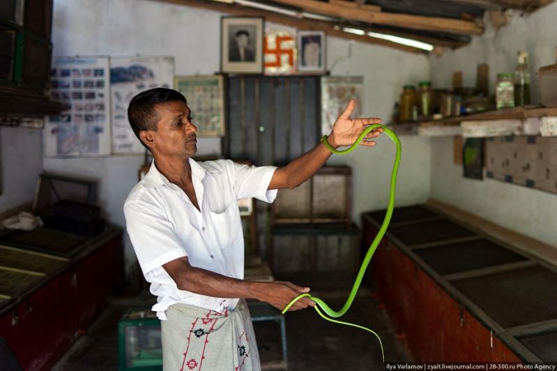Укротитель змей. Фото