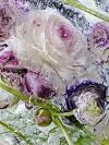 Замороженные цветы от Кэндзи Сибата (15 фото)