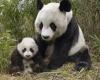Мать и дитя в мире животных (34 фото)