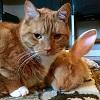 Кролик Уоллес и кот Гас – лучшие друзья (20 фото)
