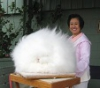Ангорский кролик - самая пушистая порода в мире (34 фото)