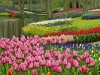 Парк цветов Кёкенкоф, Нидерланды (26 фото)