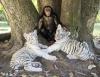 Шимпанзе - приемная мать тигрят (21 фото)