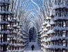 Храм из живых деревьев в Италии (20 фото)