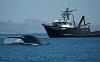 Синий кит - животное или рыба?