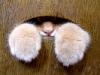 Кошачьи лапки (21 фото)