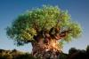 Дерево жизни в Диснеевском Королевстве животных