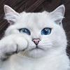 Голубоглазый Коби – самый красивый кот Инстаграма (25 фото)