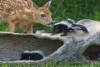 Дружба животных. Часть 2 (29 фото)
