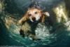 Подводная охота собак (16 фото)