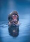 Джигокудани - парк снежных обезьян, Япония (35 фото)