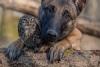 Дружба собаки и совы на фотографиях Тани Брандт (20 фото)