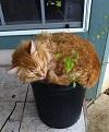 Коты-флористы (22 фото)
