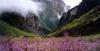 Долина Цветов - национальный парк в Гималаях