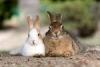 Окуносима - остров кроликов в Японии (35 фото)