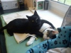Радеменес - кот-медбрат из польского приюта для животных (19 фото)