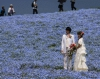 Времена года в японском национальном парке Хитачи (34 фото)