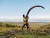 Добыча бивней мамонта в Сибири (16 фото)