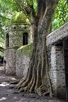 Деревья-завоеватели пространства (20 фото)