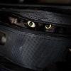 Коты-ниндзя (40 фото)