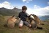 Удивительная дружба мальчика с альпийскими сурками (14 фото)