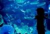 Крупнейший в мире аквариум в ТРЦ Дубай Молл, ОАЭ (28 фото)