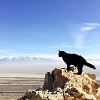 Милли - кошка-скалолаз из штата Юта, США (25 фото)