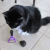 Фурминаторы - необычные расчески для домашних животных