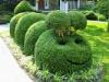 Топиар — зеленое искусство фигурной стрижки (30 фото)